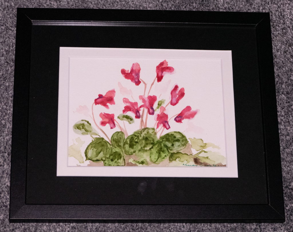 Pink Cyclamen Available to Purchase