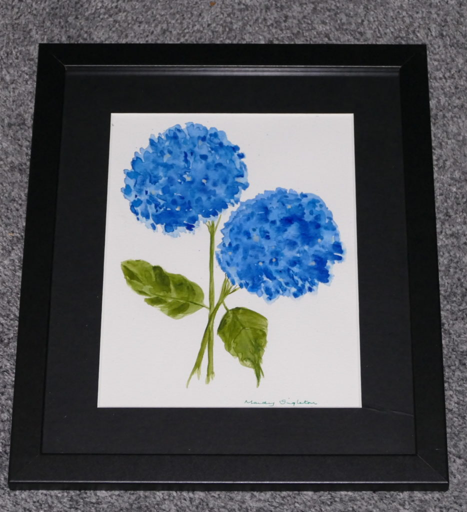 Blue Hydrangeas Available to Purchase