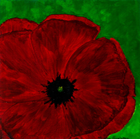 Red Poppy - Bold Flower Collection - Gallery