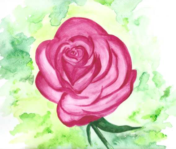 Pink Rose - Watercolour - Gallery