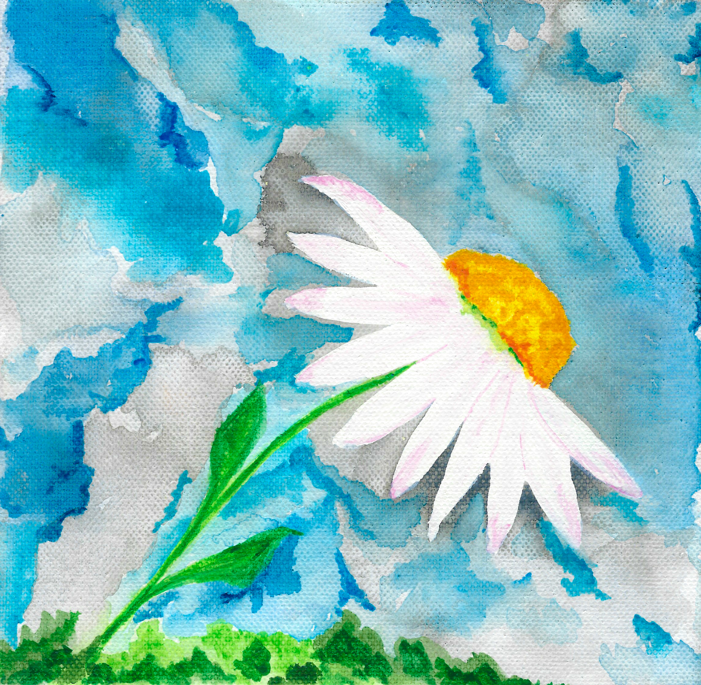 Solitary Daisy Reaches for the Sky - Watercolour - Gallery